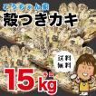 孝ちゃん厳選 生食用殻付牡蠣さこし15kg(常温お届けです)