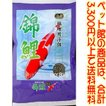 ((ペット館))(株)スマック 錦鯉8kg