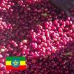 コーヒー豆<エチオピア・アラカ農園[100g]>