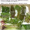 山菜 山菜セット 5〜6種(お買い得 山菜天ぷら 12〜14人位家族全員で楽しめる量)ご予約開始