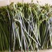 山菜わらび 山菜 蕨(ワラビ 天然)採りたて発送(500g前後)ご予約販売