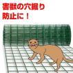 「穴掘り防止金網」簡易フェンス 害獣 くぐり抜け対策