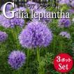 ギリア レプタンサブルー 3ポットセット