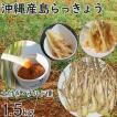 沖縄産 生 島らっきょう ラッキョウ 新鮮 土付き 1.5kg 大ぶり らっきょう 大きさバラバラ
