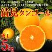 清見タンゴール 清見オレンジ 秀 L5kg 特選品 フルーツギフト 贈答