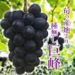 種無し巨峰 箱込1キロ前後 2〜3房入り ぶどう 葡萄