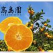 みかん 蜜柑 ミカン 高島園 完熟蜜柑 約1.5kg