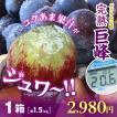 完熟巨峰1.5kg超/先行特価2980円