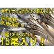 鮮サンマ 15尾 130g以上 秋刀魚 秋の味覚 丸繁