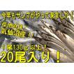 鮮サンマ 20尾 130g以上 秋刀魚 秋の味覚 丸繁