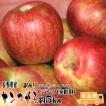 フルーツ りんご サンつがる Cランク 家庭用 約 5kg 予約 訳あり 14玉〜18玉 長野県 リンゴ 送料無料 (9月上旬頃または9月上中旬頃〜)