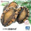 [石川県産]天然 活あわび2〜4枚 詰め合せ(約1kg相当)