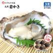 [石川県産]素潜り漁の天然物 殻付き岩牡蠣 [生食用:岩カキ] ×5個(1個300〜400g)