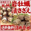[石川県産]素潜り漁の天然物 殻付き岩牡蛎&活さざえ詰め合せ(岩牡蠣5個・サザエ10個)