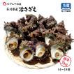 [石川県産]素潜り漁の活さざえ:中サイズ20個 詰合せ (1個100〜130g)