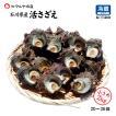 [石川県産]素潜り漁の活さざえ:小さめ 20個 詰合せ (1個80〜100g)