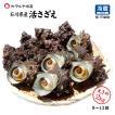 [石川県産]素潜り漁の活さざえ:大きめ 20個  詰合せ(1個130〜150g)