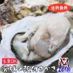 殻付き牡蠣 生食用 産地直送 宮城県産 Mサイズ20個 選別品 送料無料 旬 活 かき 生ガキ