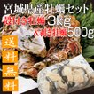 殻付き牡蠣3kgと剥き牡蠣500gセット産地直送 宮城県産 送料無料 旬 活 かき 生ガキ