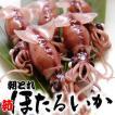 茹でほたるいか(冷蔵) 約350g (浜坂産) (釜茹で・ボイル・蛍烏賊・ホタルイカ)