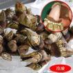 新物 亀の手(カメノテ)(冷凍)小中サイズ 約500g (山陰浜坂港産) ペルセベス