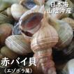 赤バイ貝(ばい・エゾボラモドキ)(生)殻付き約500g前後(2-5個入)(浜坂産)