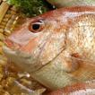 天然 真鯛(たい)(生) 1尾 約800-900g (浜坂産) (タイ)