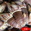 希少なサイズ 亀の手(カメノテ)(冷凍)大〜特大サイズ 500g入 国産(山陰浜坂産)ペルセベス