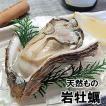 天然岩牡蠣(生)大サイズ 3個 (山陰沖産)(いわがき、イワカキ、いわかき、岩がき、岩ガキ)