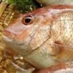 天然 真鯛(たい)(生) 1尾 約550-650g (浜坂産) (タイ)