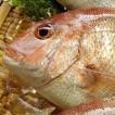 天然 真鯛(たい)(生) 1尾 約800-900g程度 (浜坂産)
