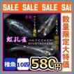 メダカ/孔雀 螺鈿光月虹めだか 稚魚10匹
