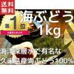 海ぶどう 沖縄 業務用 1kg 久米島産海ぶどう1kg(500g×2パック) お土産 海洋深層水 で有名な久米島産海ぶどう100% おすすめ 春ウコン茶2包おまけ付き