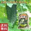 ゴーヤ茶 ゴーヤ 送料無料 おすすめ 沖縄県産 健康茶 種入り ゴーヤー茶スライス(70g) お土産 送料無料 おすすめ