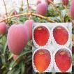 【発送7月上旬〜8月中旬】【送料無料】沖縄産アップルマンゴー【秀品】2kg(大玉4〜7玉)