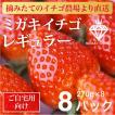 いちご ミガキイチゴ スタンダード(ご自宅用)8パック 275g以上×8