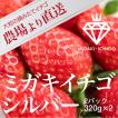 いちご ミガキイチゴ シルバー(ご自宅用/大粒)2パック 320g×2