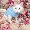 ペット猫セーター服冬暖かい猫服猫子猫衣装コートキティニットセーターペット犬服 グループ上 ホーム ガーデン から 猫 服 中