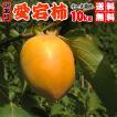 (予約11月20日以降〜)大箱10kgで送料無料・愛宕柿(干し柿用)渋柿・大箱10kg・愛媛産・ご家庭用