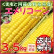 お中元 熊本 阿蘇 ギフト とうもろこし スイートコーン 波野高原産 エメリコーン 恵味ゴールド 3.5kg