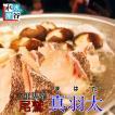 送料無料 幻の高級魚 尾鷲 マハタ(1.3〜1.5kg) ハタ クエ鍋 三重県産 生産量日本一 お鍋  お刺身 お寿司 活〆 クエ 鍋