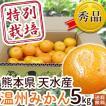 熊本県天水産 特別栽培温州みかん5kg 送料無料