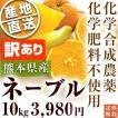 熊本県産・国産ネーブルオレンジ(訳あり品・規格外・B品・サイズ混合)5kg【送料無料】