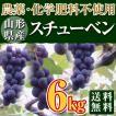 稲泉農園・山形県産スチューベン 秀品(種ありぶどう)6kg(18〜21房)
