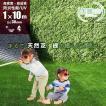 人工芝 ロール 1m×10m 芝丈30mm 高密度最高級品質 防炎・UVカット・耐久 リアル人工芝 庭 緑化 綺麗 高密度 高級 芝  [ 美麗 BIREI ]