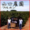 日本人が作ったブラジルコーヒー「山口農園ブルボン」500g送料無料!