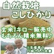 新米 『自然栽培 こしひかり玄米 1キロ』熊本県天草産