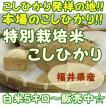 福井県産 『特別栽培米こしひかり』 5キロ上白米 白米 うるち米 コシヒカリ お米 おこめ おすすめ米