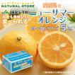 ニューサマーオレンジ M L 2L 3L サイズ 愛媛県産 爽やかな柑橘 日向夏