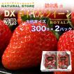【要冷蔵】ロイヤルクイーン  2パック化粧箱 大粒  DX 約300g×2パック  苺 いちご イチゴ お取り寄せフルーツ 父の日 母の日 ギフト ご贈答用に最適